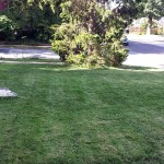 backyard stones course lawn