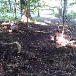 backyard stones course woods